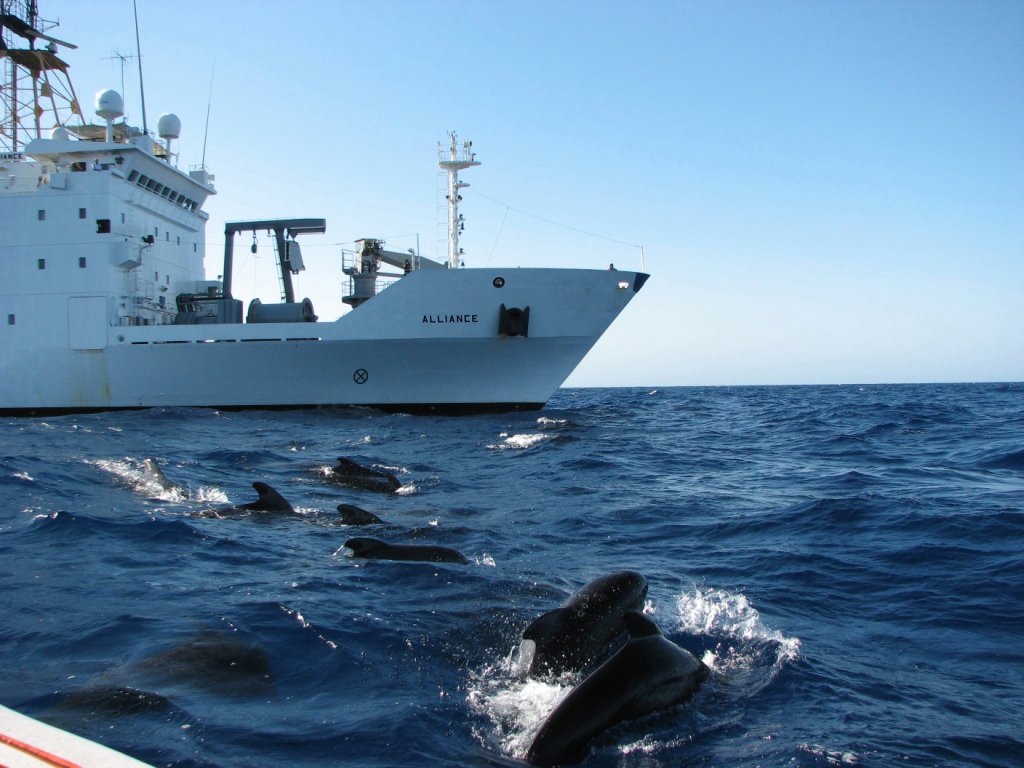 Whales surface near a U.S. Navy sponsored research vessel.