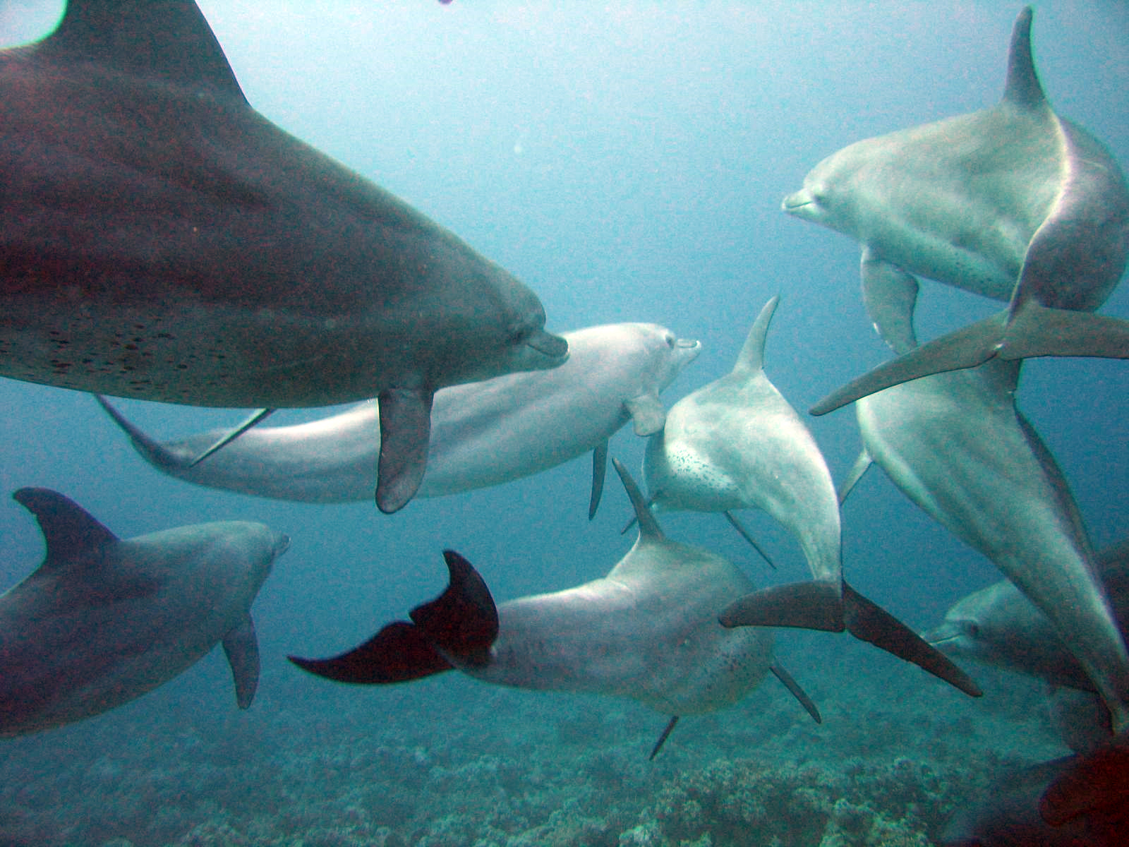 Through observational studies, Dolphins have displayed social behavior that is similar in the ways humans interact.