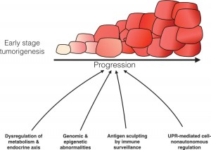 Role of UPR-based regulation in tumor development.